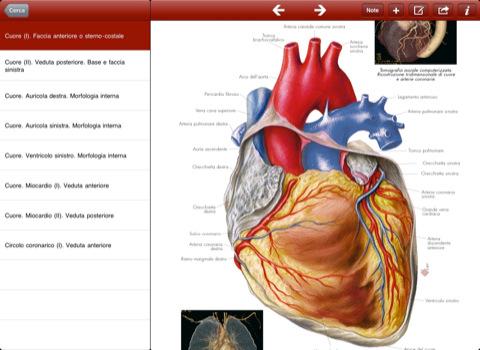 goWare Atlante di Anatomia